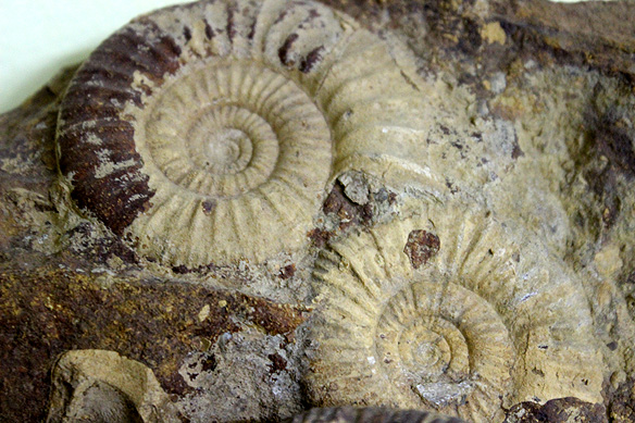 fossil_park1