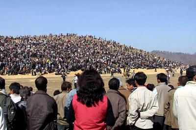 hmongbullfight