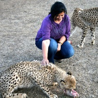 south africa: travel resources—where, what, why, how