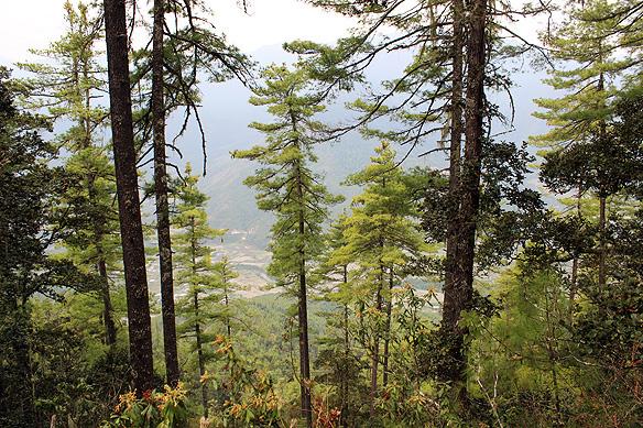 bhutan_forest