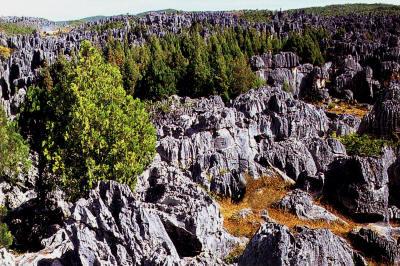 stoneforest1