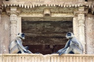 The deserted archaeological site is now a home to baboons, and a place of wonder to travellers.