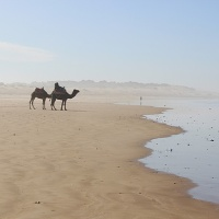 36 hours in essaouira, where europe meets africa