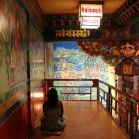 36 hours in dharamshala